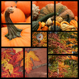 Bigstockphoto_Fall_Collage_567636